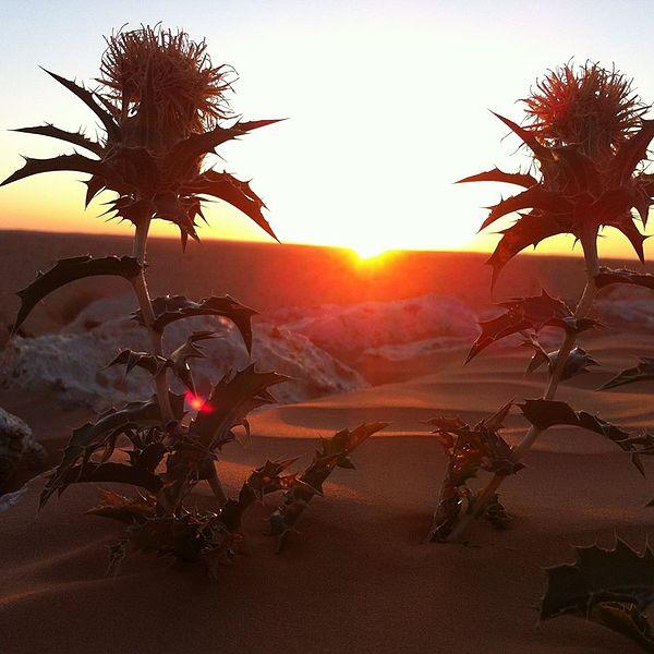 Sunset_in_Tunisian_Desert_Douz